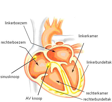 031 Het hart2.jpg