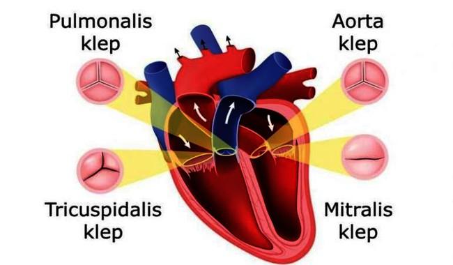 Het hart CAR025.jpg