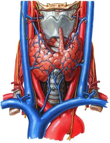 KVB-005 Schildklieroperatie afbeelding 2b nieuw.jpg