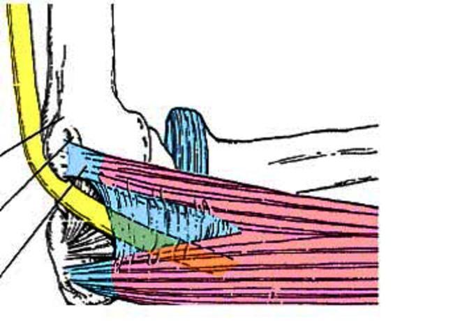 ulnaris neuropathie elleboog .jpg