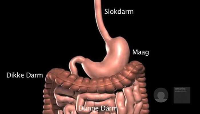 teveel afvallen na gastric bypass